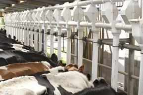 Dairy Feeding Spares & Parts